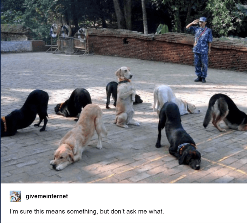 funny tumblr post animals dog sitting on hind legs inside circle of dogs with front paws down I'm sure this means something, but don't ask me what.