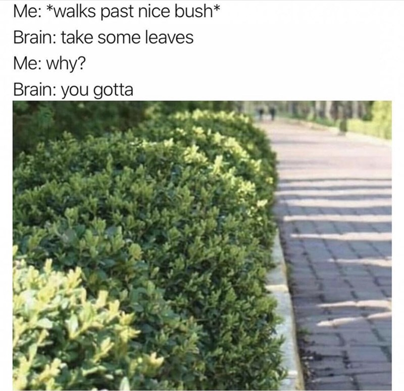 "Caption that reads, ""Me: *Walks past nice bush;* Brain: Take some leaves; Me: Why? Brain: You gotta"" above a pic of some bushes"