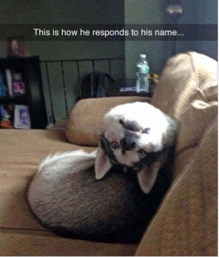 Dog - This is how he responds to his name...