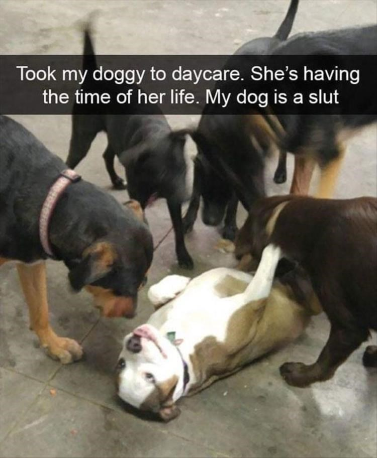 Dog - Took my doggy to daycare. She's having the time of her life. My dog is a slut