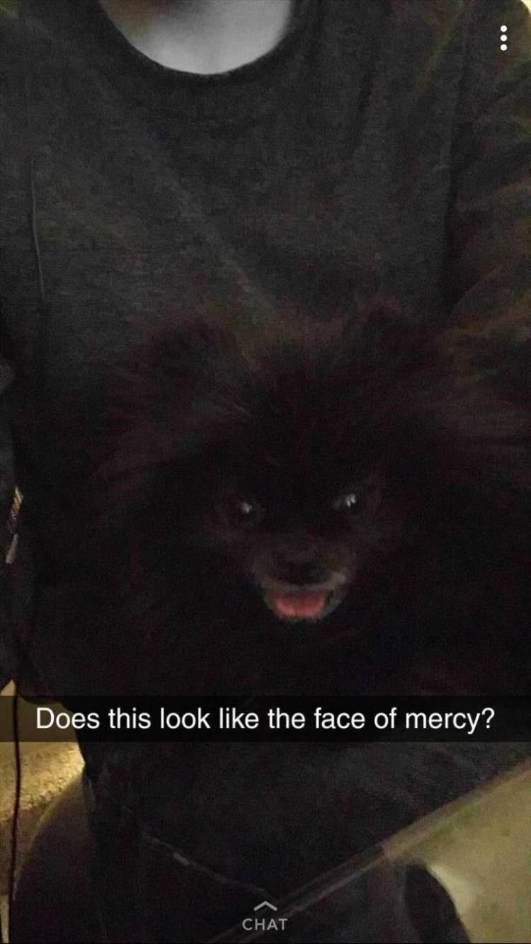 Pomeranian - Does this look like the face of mercy? CHAT