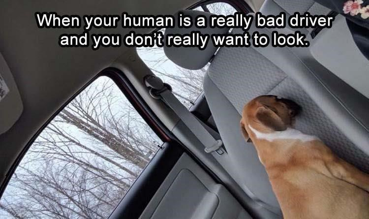 Vehicle door - When your human is a really bad driver and you don't really want to look.