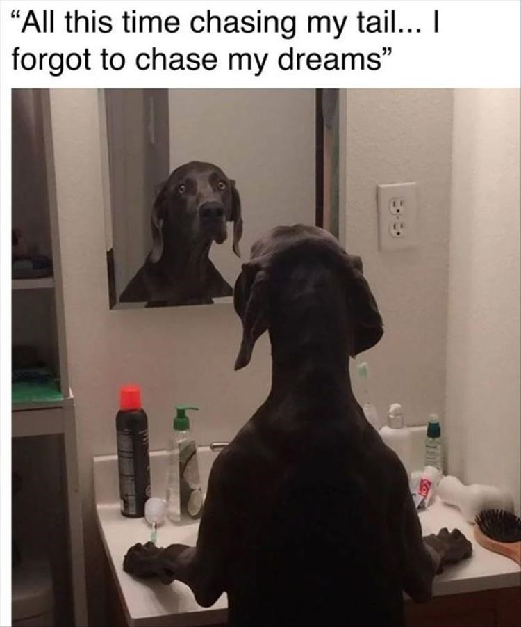 "Dog - ""All this time chasing my tail... I forgot to chase my dreams"""