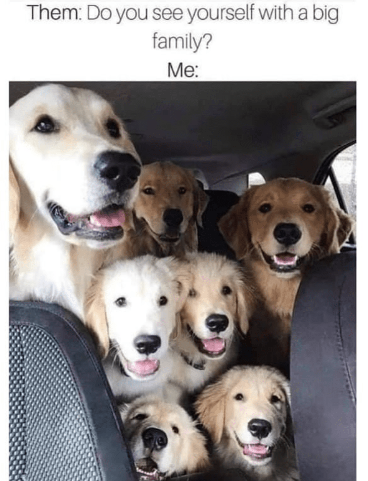 Dog - Them: Do you see yourself with a big family? Me:
