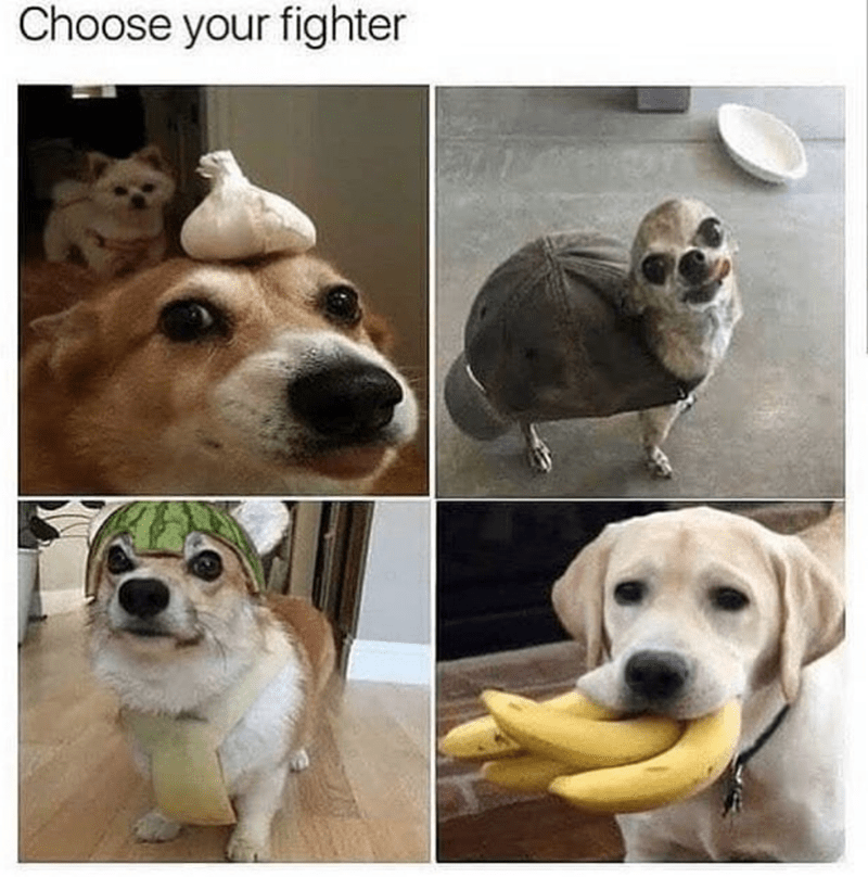 Dog - Choose your fighter