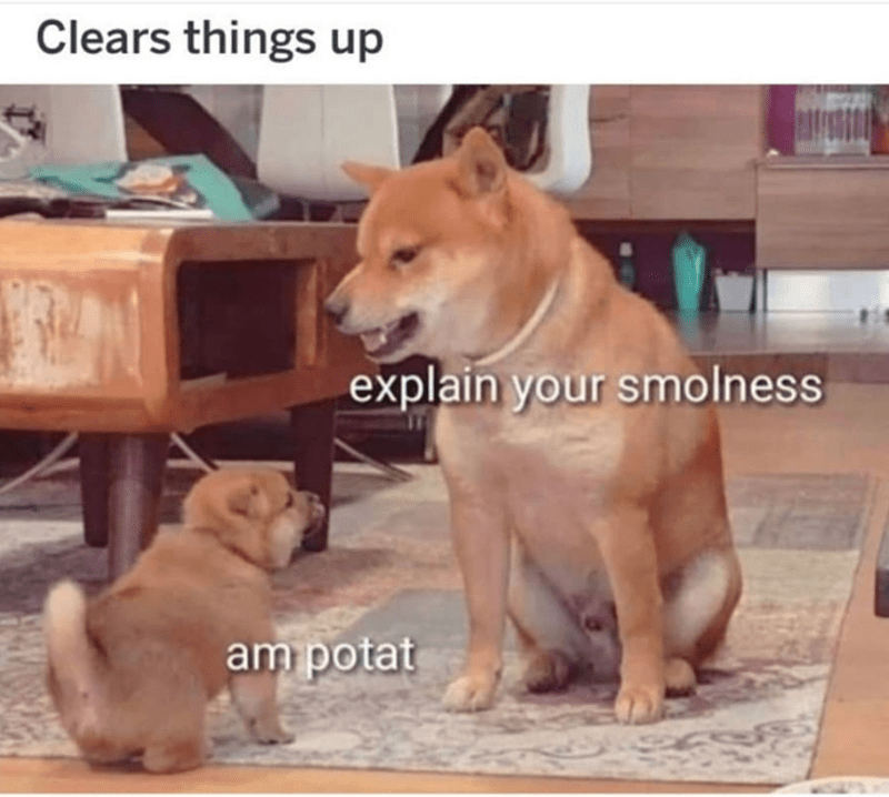 Mammal - Clears things up explain your smolness am potat
