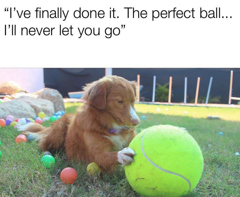 "Dog - ""I've finally done it. The perfect ball... I'll never let you go"""