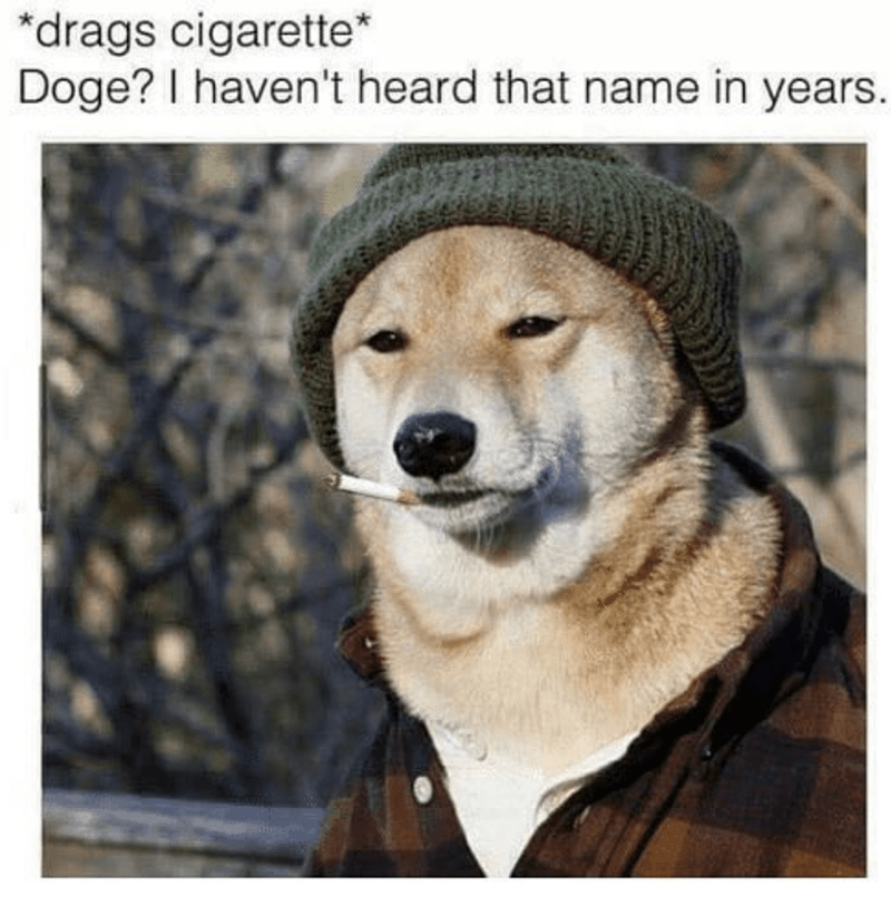 Dog - drags cigarette* Doge? I haven't heard that name in years.