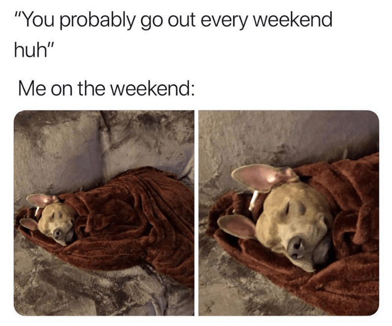 """Adaptation - """"You probably go out every weekend huh"""" Me on the weekend:"""