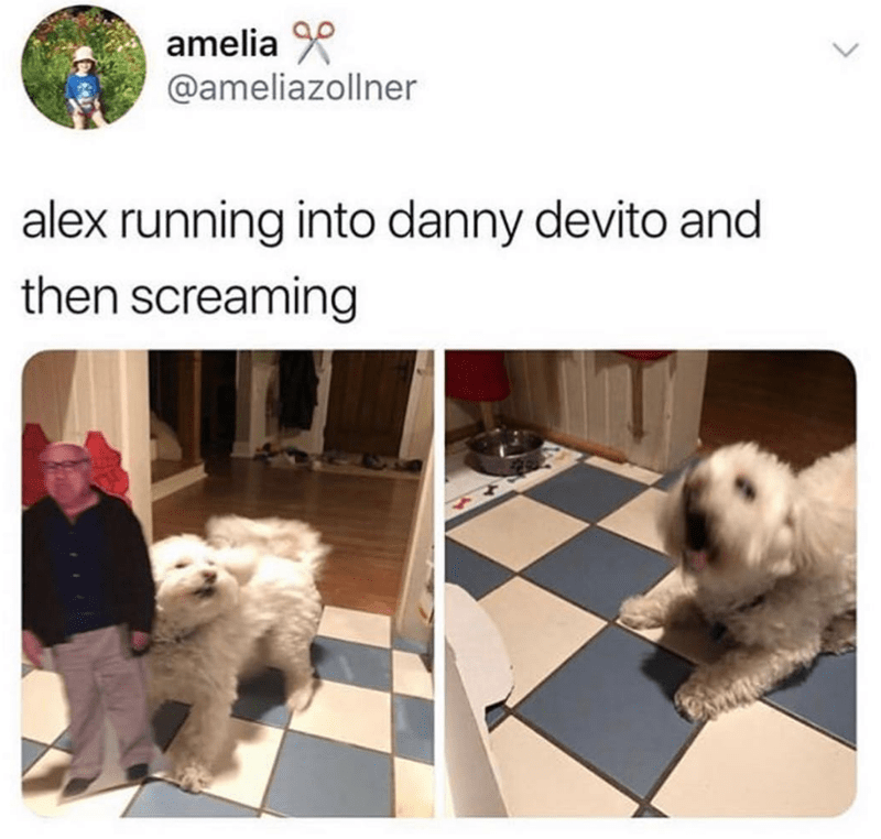 Mammal - amelia @ameliazollner alex running into danny devito and then screaming