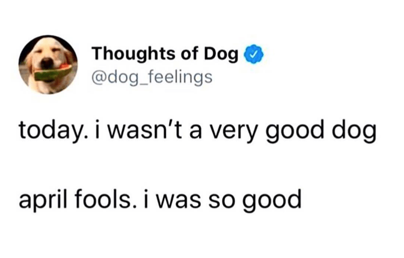 Text - Thoughts of Dog @dog_feelings today. i wasn't a very good dog april fools. i was so good