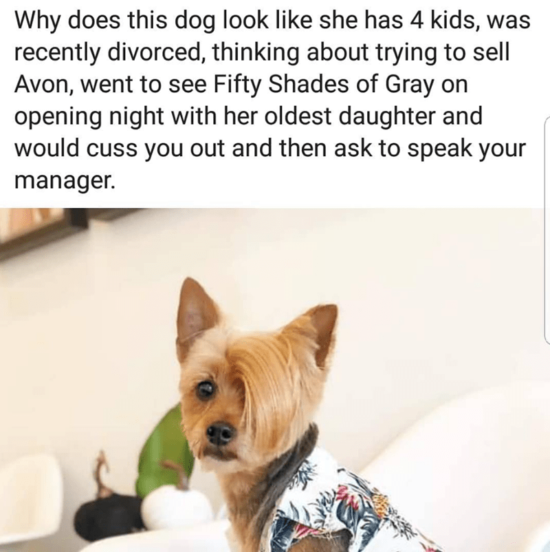 Dog - Why does this dog look like she has 4 kids, was recently divorced, thinking about trying to sell Avon, went to see Fifty Shades of Gray on opening night with her oldest daughter and would cuss you out and then ask to speak your manager.
