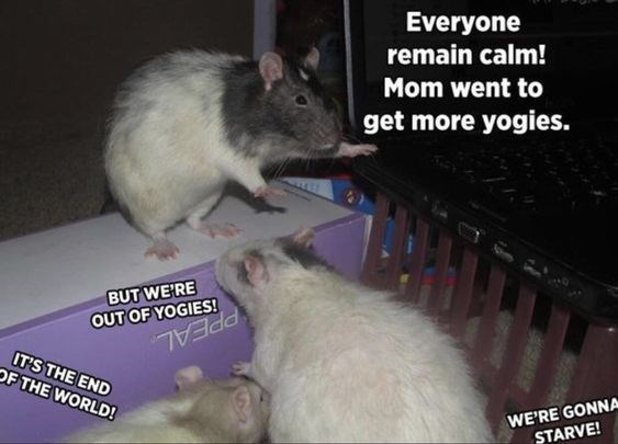 Rat - Everyone remain calm! Mom went to get more yogies. BUT WE'RE OUT OF YOGIES! PPEAL IT'S THE END OF THE WORLD! WE'RE GONNA STARVE!