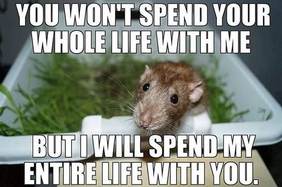 Hamster - YOU WON'T SPEND YOUR WHOLE LIFE WITH ME BUTIWILL SPEND-MY ENTIRE LIFE WITH YOU.