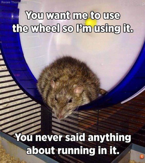 Rat - Renee Thomeson RAT LOUIC You want me to use the wheel so Pm using it. You never said anything about running in it.