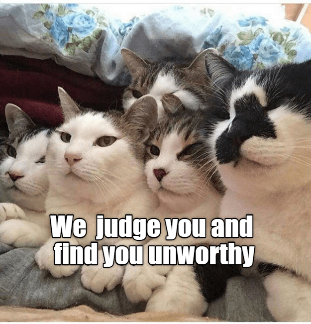 Cat - We judge you and find you unworthy