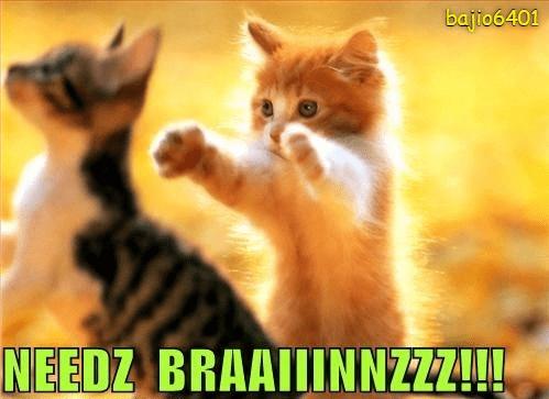 Cat - bajio6401 NEEDZ BRAAIINNZZZ!!