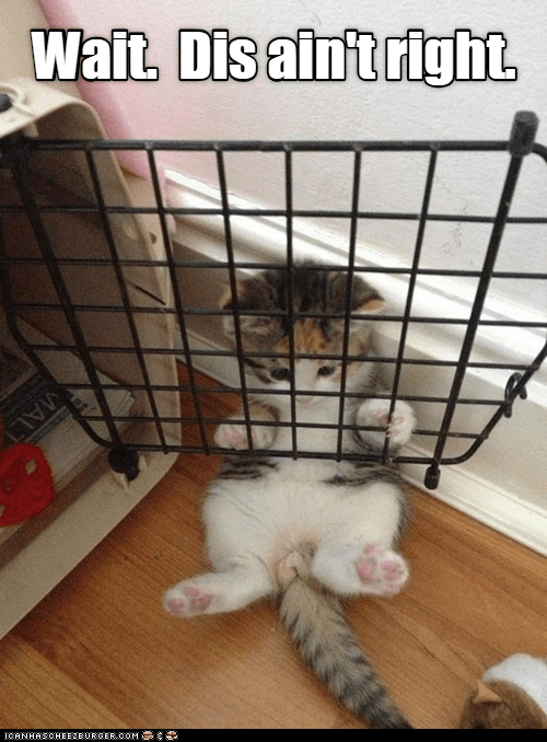 Cat - Wait, Dis aintright MALT CANHASCHEE2EURGER cOM