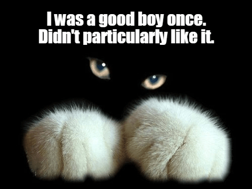 Cat - Iwas a good boy once. Didn't particularly like it.