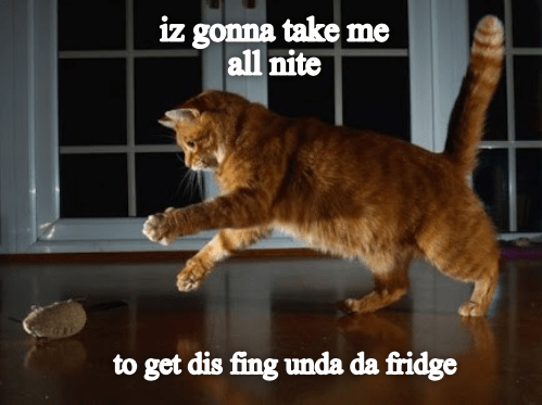 Cat - iz gonna take me all nite to get dis fing unda da fridge