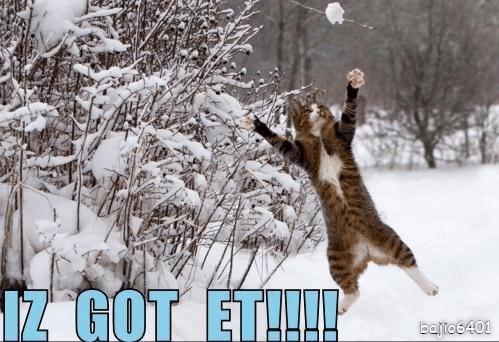Cat - IZ GOT ET!!! batto6401