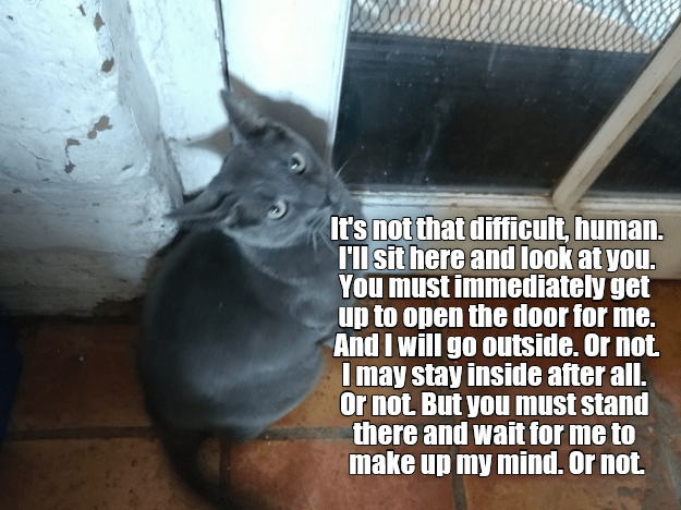 Whiskers - It's not that difficult, human. I'l sit here and look at you. You must immediately get up to open the door for me. And I will go outside. Or not Imay stay inside after all. Or not But you must stand there and wait for me to make up my mind. Or not.