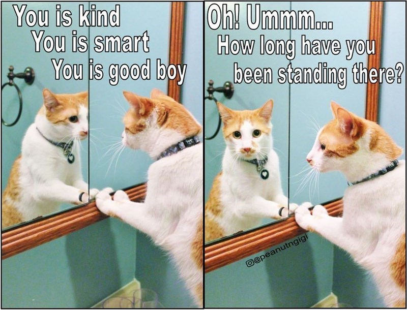 Cat - You is kind You is smart You is good boy |Oh! Ummm.. How long have you been standing there? 00 @@peanutngigi