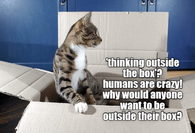 Cat - thinking outside the box? humans are crazy! why would anyone want to be outside their box