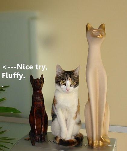 Cat - <---Nice try, Fluffy.