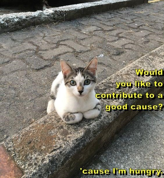 Cat - Would you like to Contribute to a good cause? 'cause I'm hungry