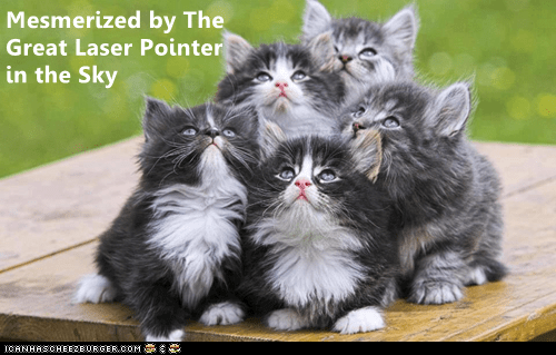 Cat - Mesmerized by The Great Laser Pointer in the Sky ICANHASCHEE2EURGER CoM