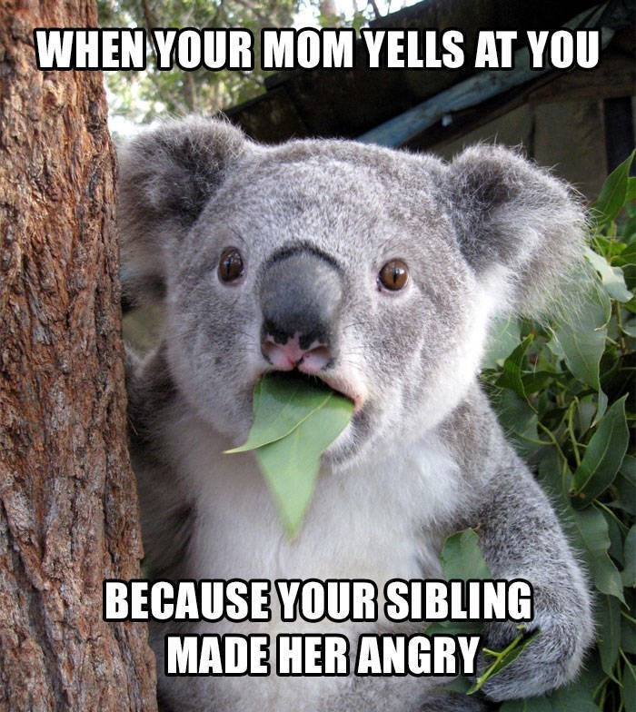 Koala - WHEN YOUR MOM YELLS AT YOU BECAUSE YOUR SIBLING MADE HER ANGRY