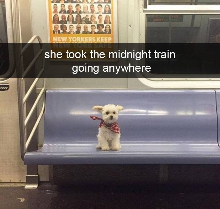 """Pic of a little dog sitting on a train seat with Snapchat caption that reads, """"She took the midnight train going anywhere"""""""