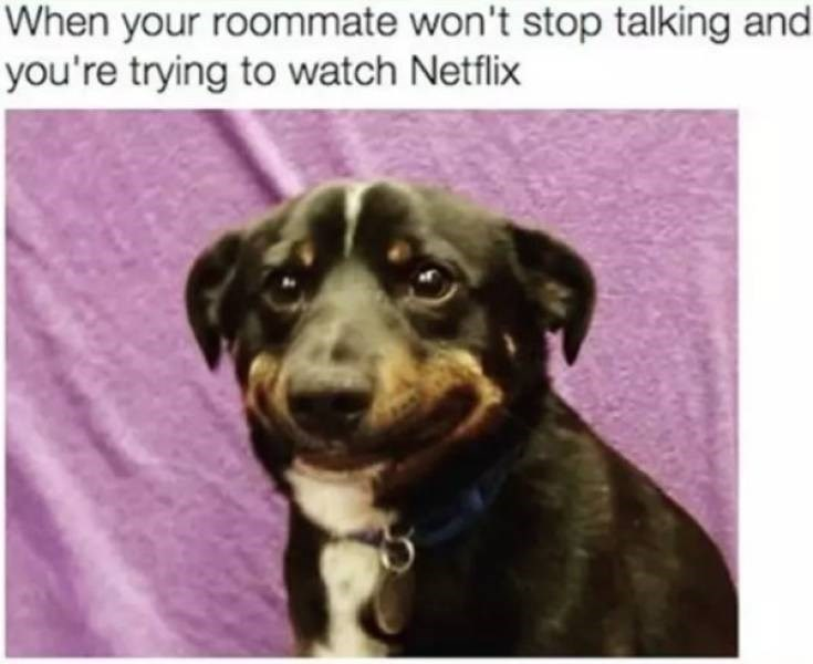 Dog - When your roommate won't stop talking and you're trying to watch Netflix