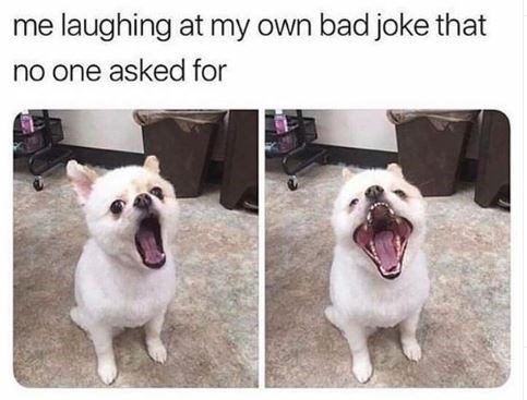 Dog breed - me laughing at my own bad joke that no one asked for
