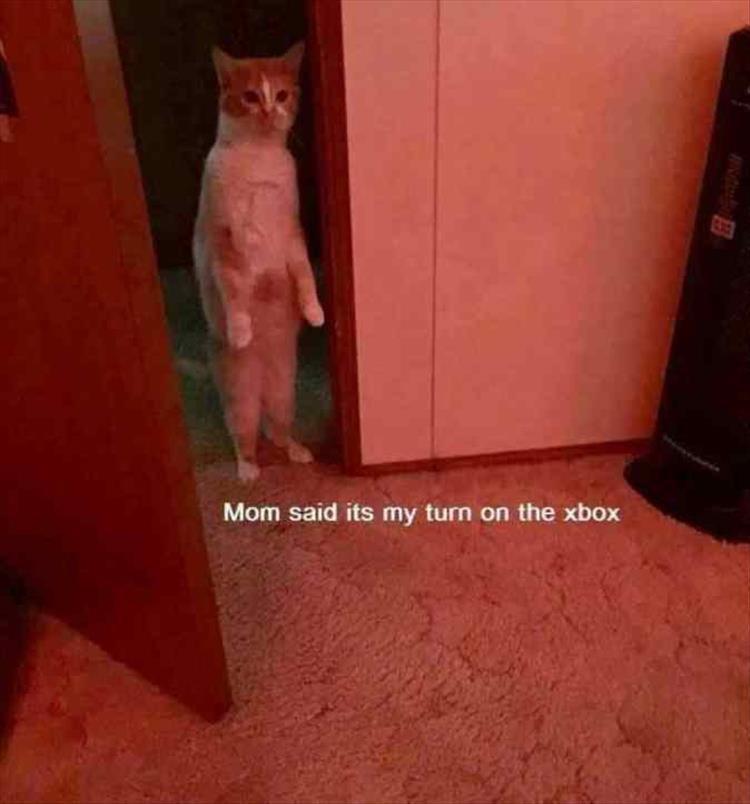Cat - Mom said its my turn on the xbox