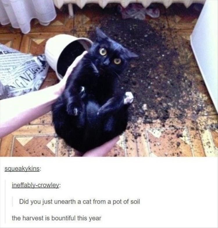 Cat - Black cat - GNE queakykins: ineffably-crowley Did you just unearth a cat from a pot of soil the harvest is bountiful this year