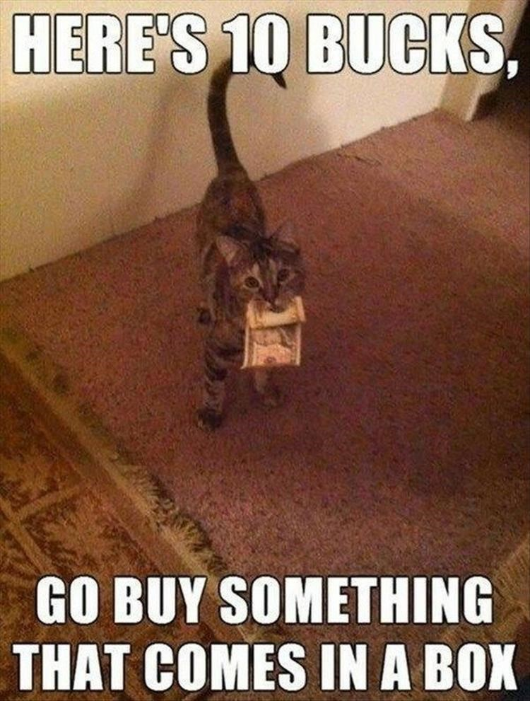 Cat - Floor - HERE'S 10 BUCKS GO BUY SOMETHING THAT COMES IN A BOX