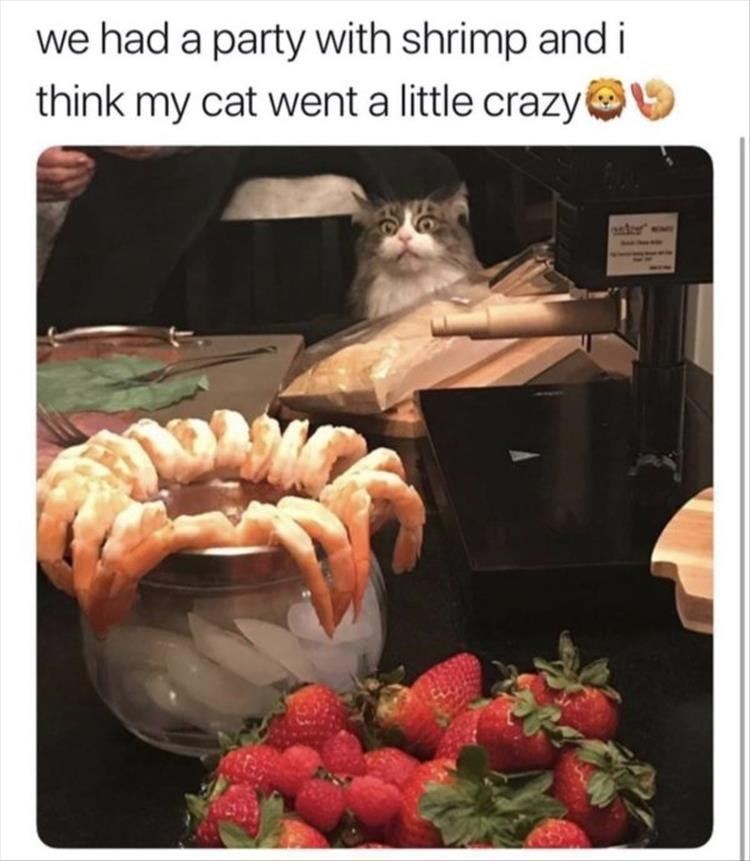 Cat - Organism - we had a party with shrimp and i think my cat went a little crazy aer
