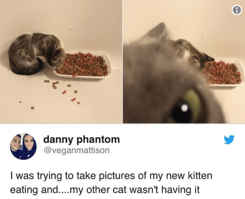 Cat - Organism - danny phantom @veganmattison I was trying to take pictures of my new kitten eating and....my other cat wasn't having it