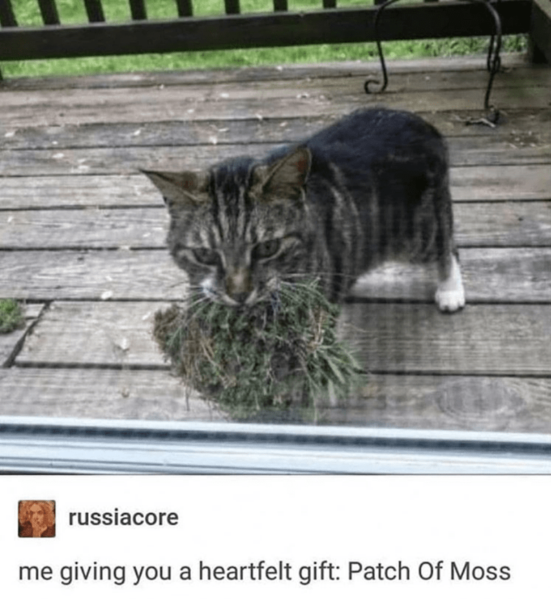 Cat - Cat - russiacore me giving you a heartfelt gift: Patch Of Moss