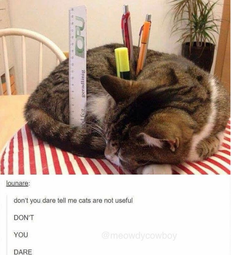 Cat - Cat - lounare: don't you dare tell me cats are not useful DON'T @meowdycowboy YOU DARE d feg geradlinig
