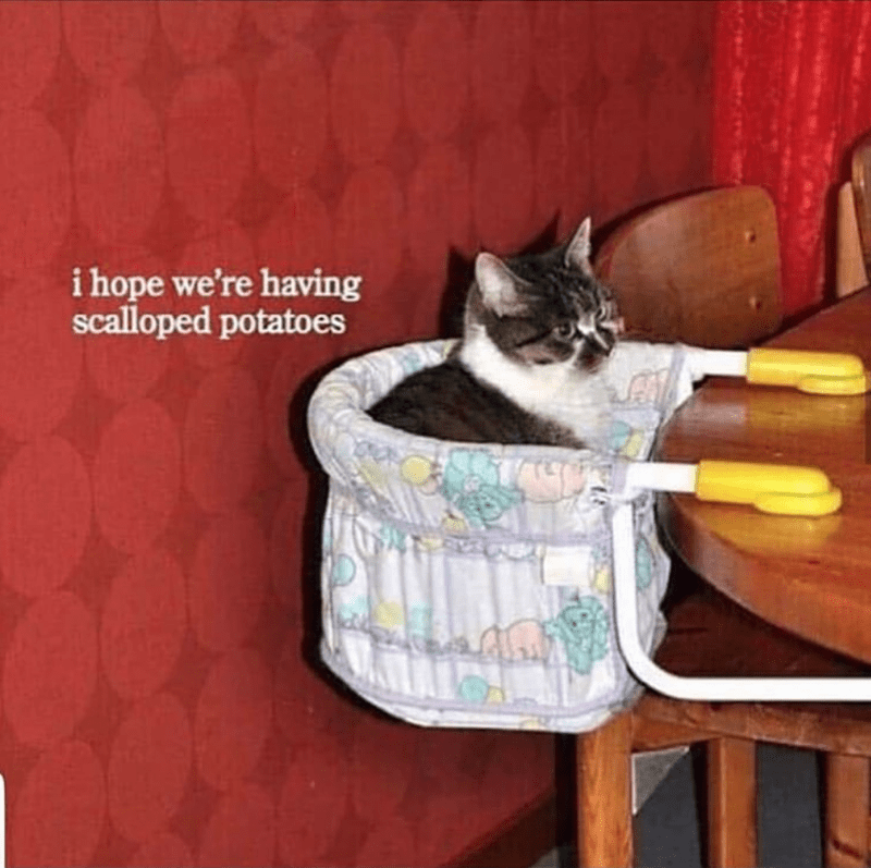 Cat - Cat - i hope we're having scalloped potatoes