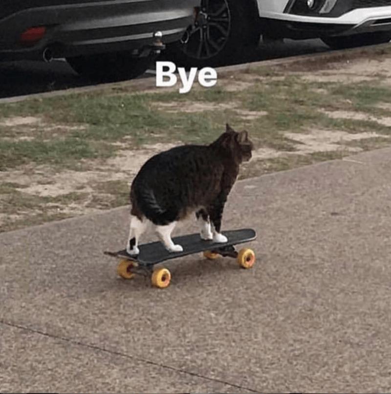Cat - Cat - Bye