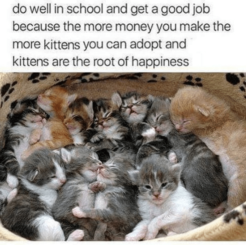 Cat - Cat - do well in school and get a good job because the more money you make the more kittens you can adopt and kittens are the root of happiness
