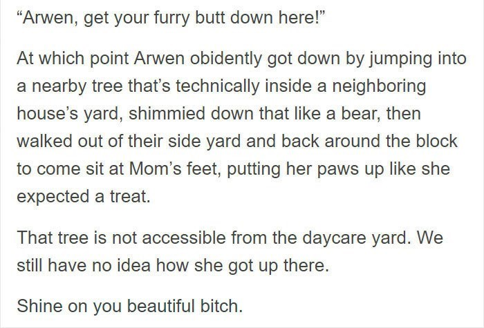 """Text - """"Arwen, get your furry butt down here!"""" At which point Arwen obidently got down by jumping into a nearby tree that's technically inside a neighboring house's yard, shimmied down that like a bear, then walked out of their side yard and back around the block to come sit at Mom's feet, putting her paws up like she expected a treat. That tree is not accessible from the daycare yard. We still have no idea how she got up there. Shine on you beautiful bitch."""