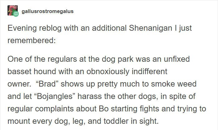 """Text - gallusrostromegalus Evening reblog with an additional Shenanigan I just remembered: One of the regulars at the dog park was an unfixed basset hound with an obnoxiously indifferent owner. """"Brad"""" shows up pretty much to smoke weed and let """"Bojangles"""" harass the other dogs, in spite of regular complaints about Bo starting fights and trying to mount every dog, leg, and toddler in sight."""