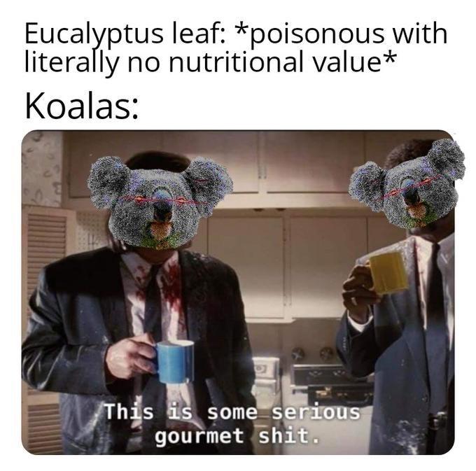 pulp fiction meme - Photo caption - Eucalyptus leaf. *poisonous with literally no nutritional value* Koalas: This is some serious gourmet shit.