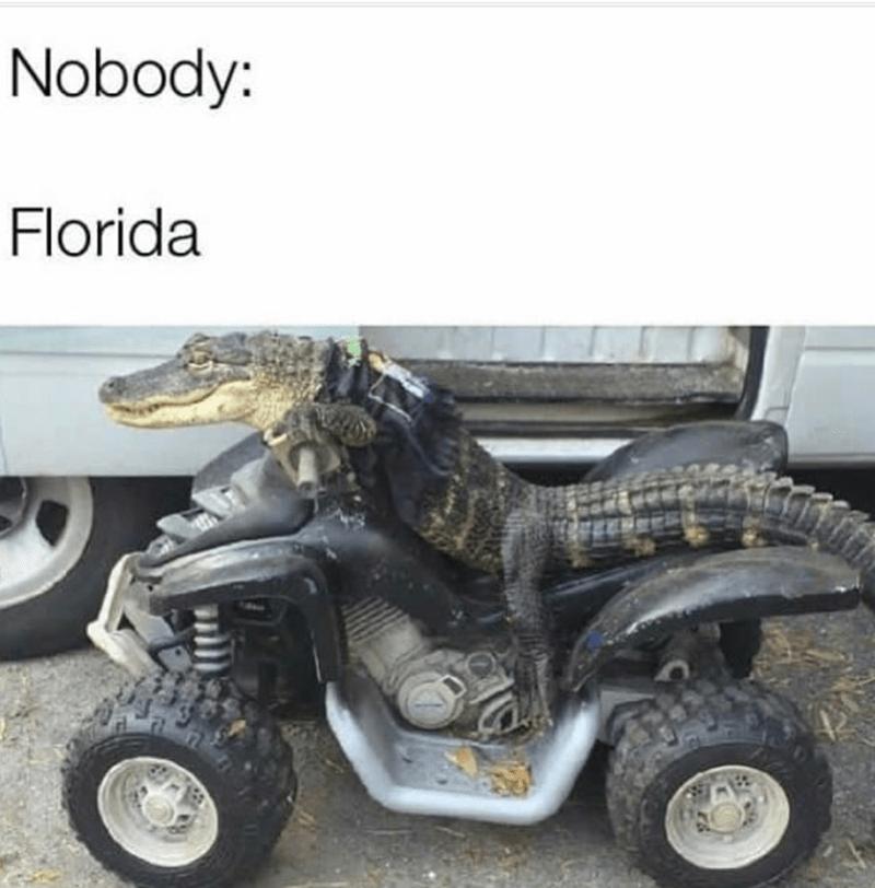 Motor vehicle - Nobody: Florida