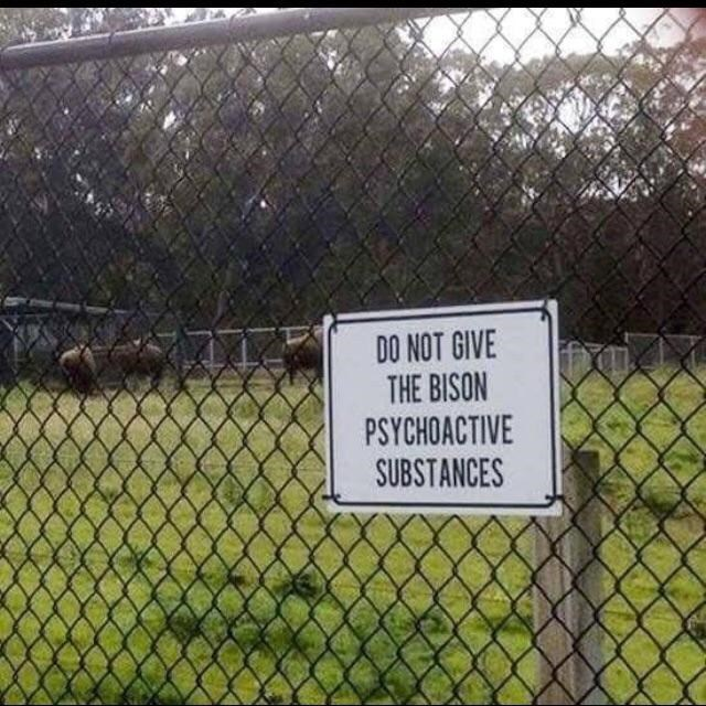 Wire fencing - DO NOT GIVE THE BISON PSYCHOACTIVE SUBSTANCES